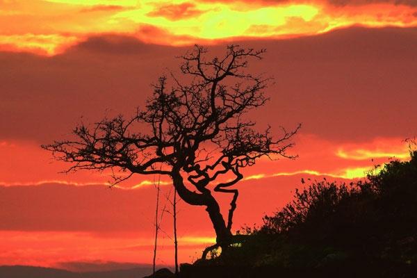 Tree against fiery sky by PhilAJ