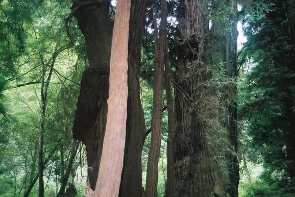 Muir Woods # 07 by TimothyDMorton