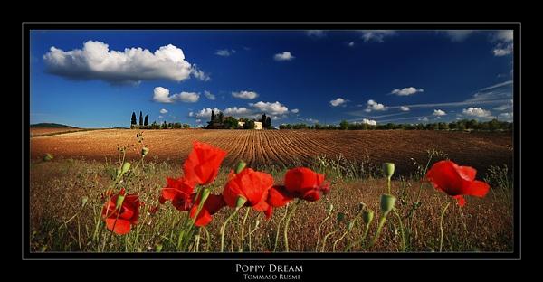 Poppy Dream by rusmi