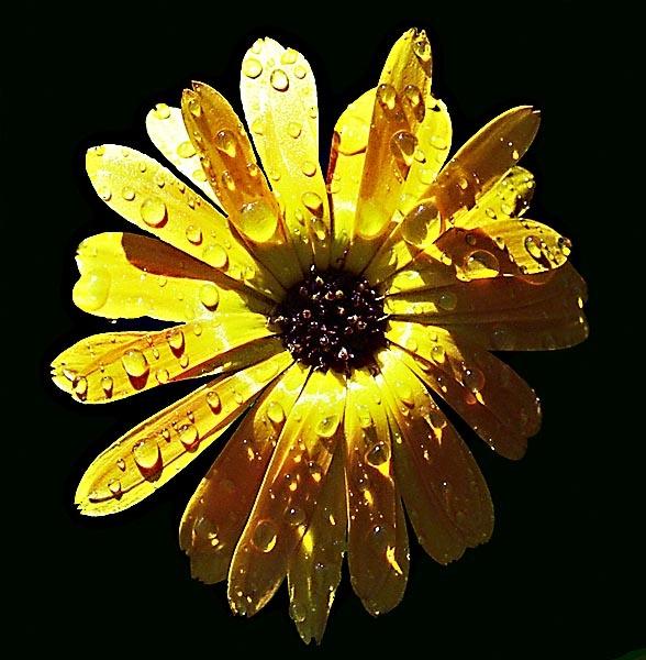 Sunshine After Rain by Topcat