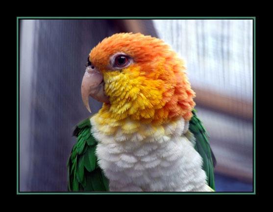 Parrot by Lorraine