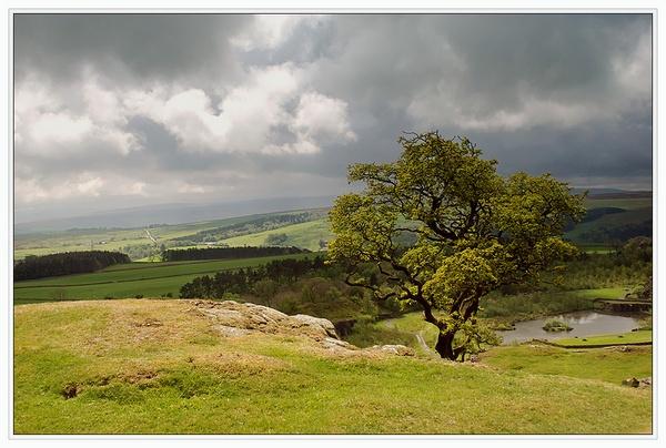 Hadrian\'s: Tree by TelStar