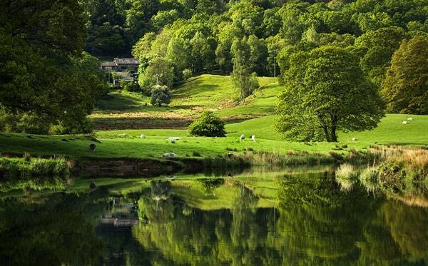Cumbrian Greens by walterL