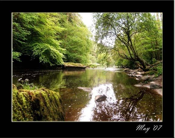 woodland river by Alex_M