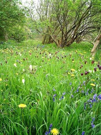 Natures spring carpet by riffusraffus