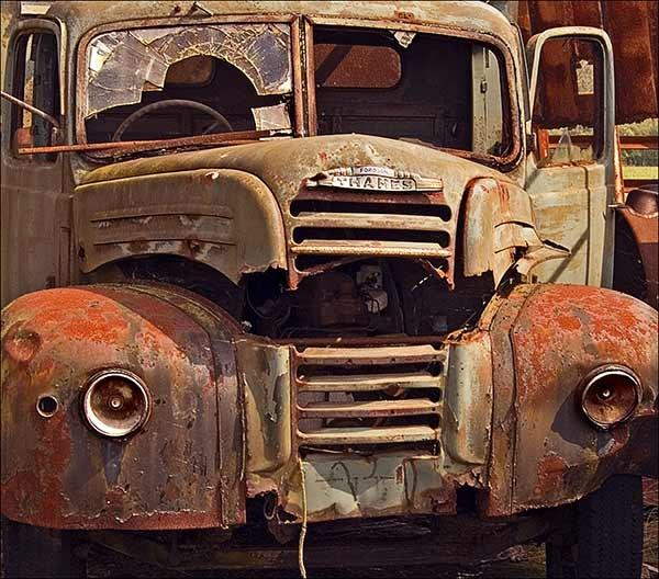 Rusty by Bulldog