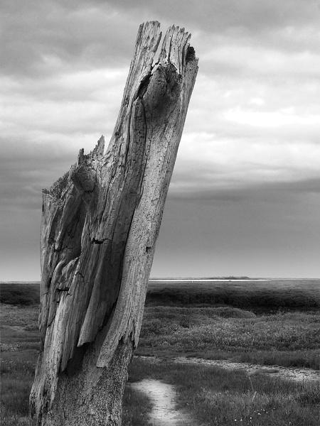 Thornham tree by Bellie