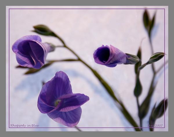 Rhapsody in Blue by catnappin