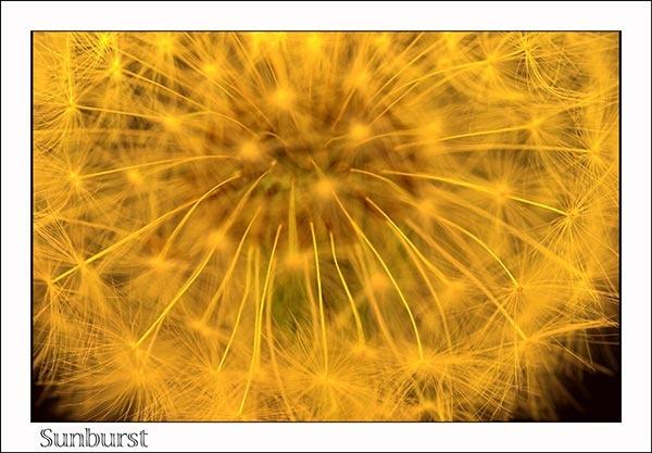 Sunburst by davey