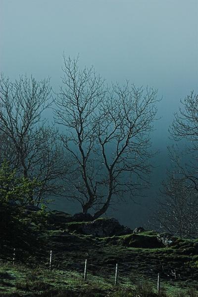 Trees & Mist by conrad