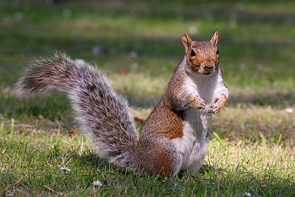 Another nut please by Jon_Iliffe