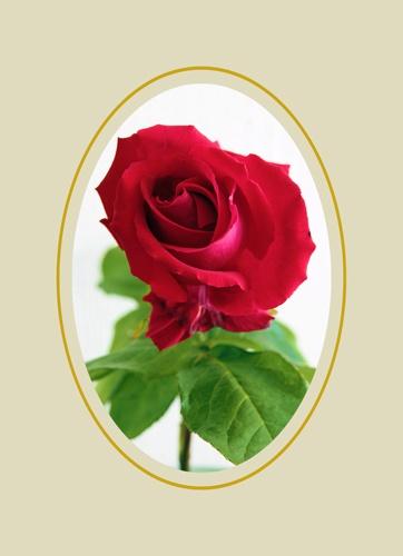 rose by nigelo