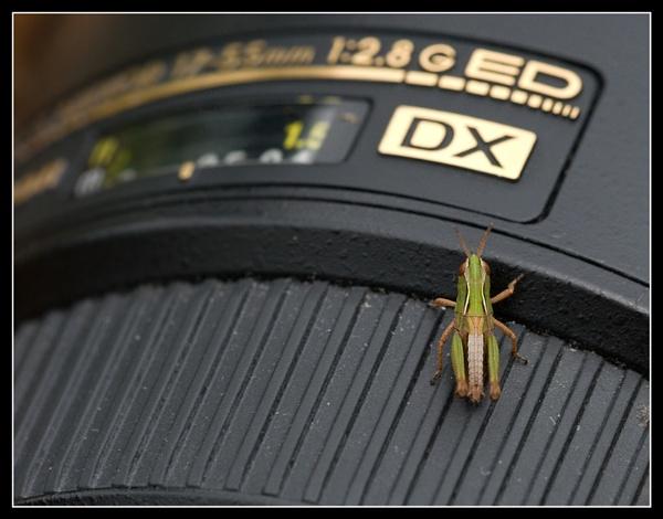 Small Nikon Fan by Oy_bumbler