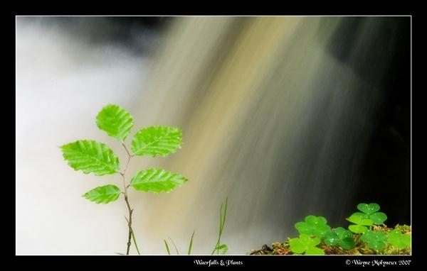 Plants & Falls by waymol
