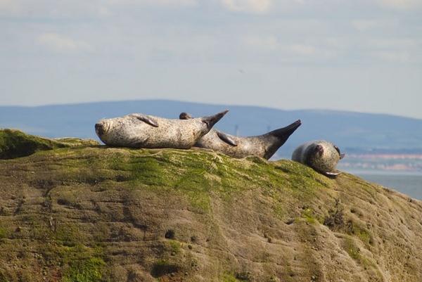 Forth Seals 2 by naifud