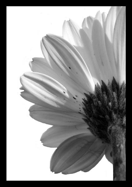 flower5 by CRAIGR2
