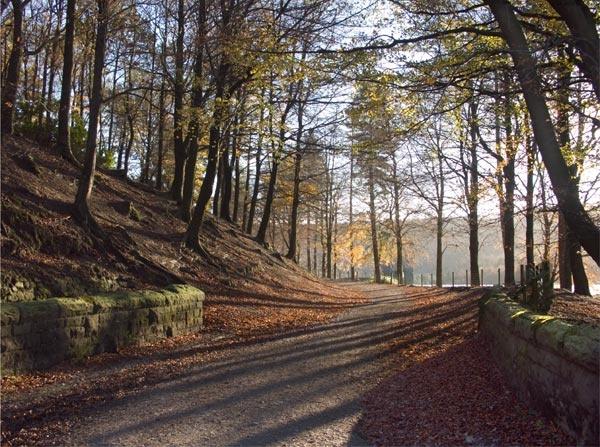 Woodland Walk by Tony_W