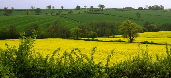 Fields of Gold by Tony_W