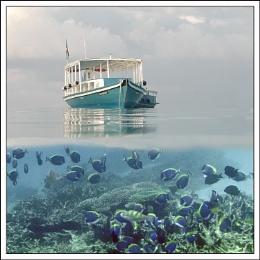 Snorkeller's world.