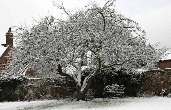 snow tree by djmaz