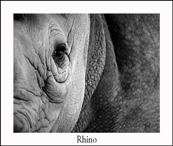 Rhino by nikguyatt