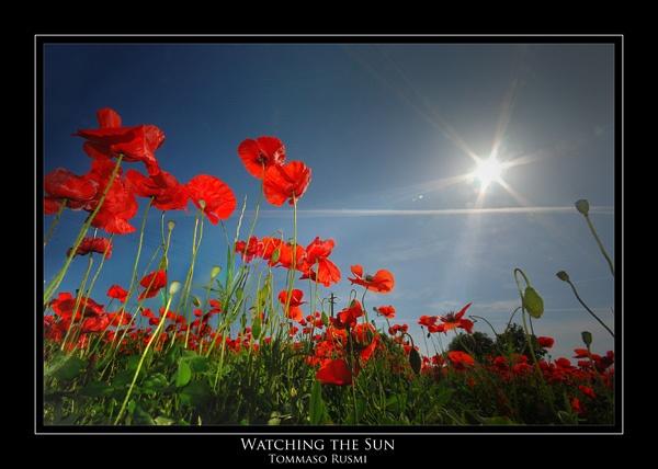 Watching the Sun by rusmi