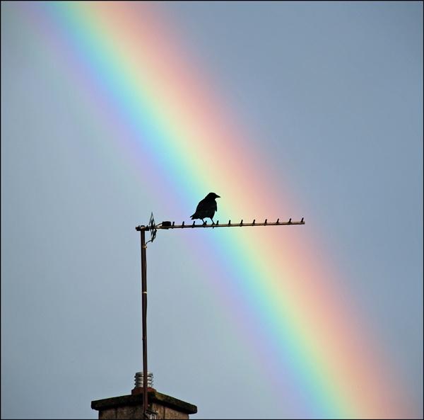 Black Bird and a Rainbow by grumpalot