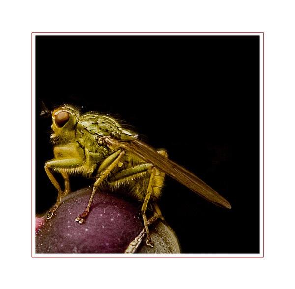 Fly by Steve Cribbin