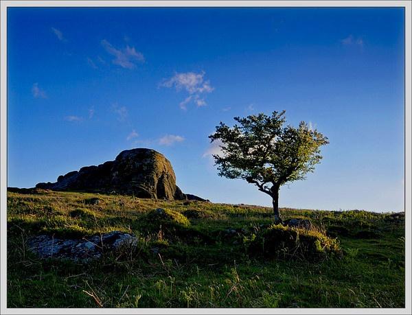 Tree at Haytor by RockArea
