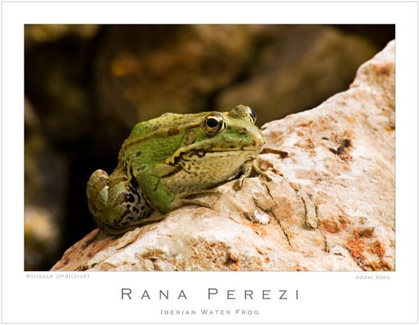 Rana Perezi by sherlob