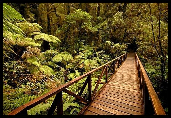 Woodland Walk (2) by u47sb2
