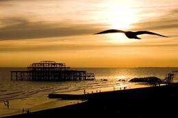 Sunset Seagull Silhouette