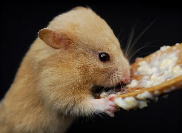 Daisy Likes Porridge! by Ingleman
