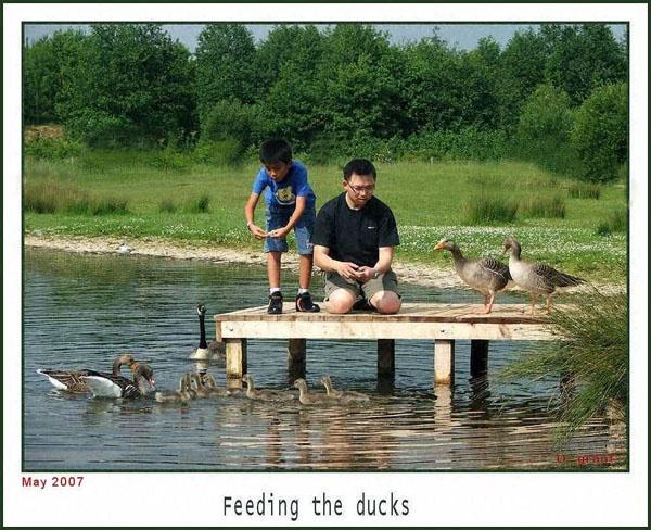 feeding the ducks by daringdaphne