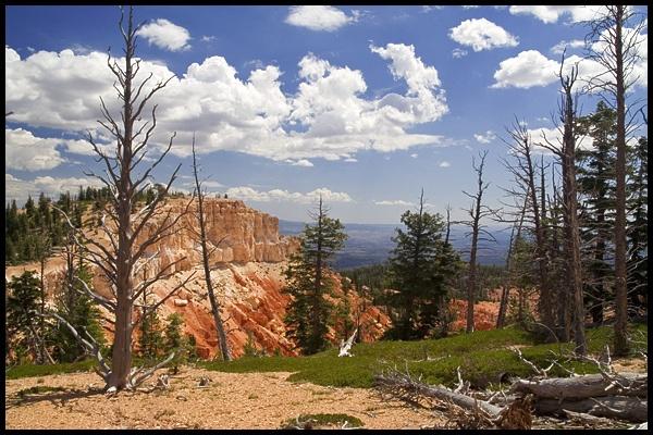 Brystlecone Pines by kalseru