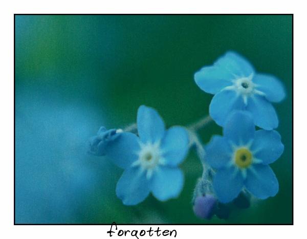 Forgotten? by sputnki