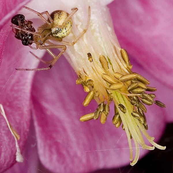 Pretty Deadly Flower by Tony_Baloni
