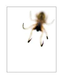 Spider - take 1