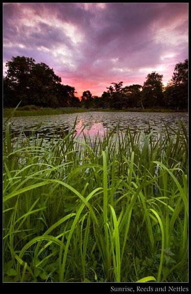 Sunrise, Reeds & Nettles by wamp