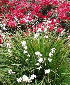 Kelburn Gardens by Caledonia