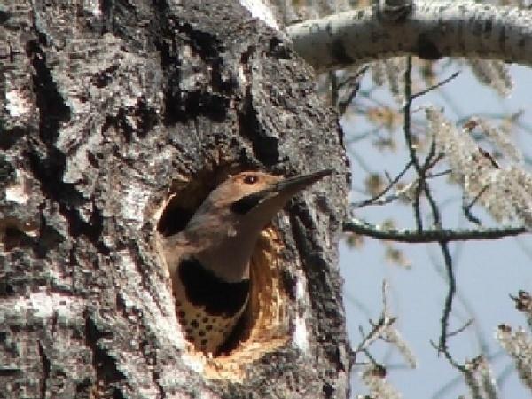 woodpecker by martinlegg