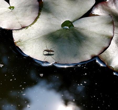 Metallic Pond by S_Boulding