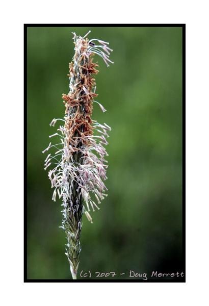 shaggy grass by sputnki