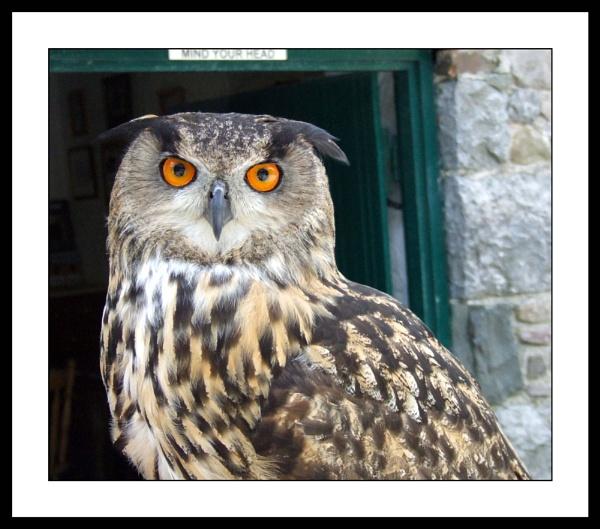 Eagle Owl by mark.kavanagh