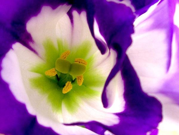 Purple is the Colour by netti spaghetti