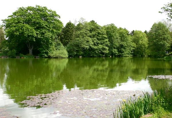 Himley pool by rodp