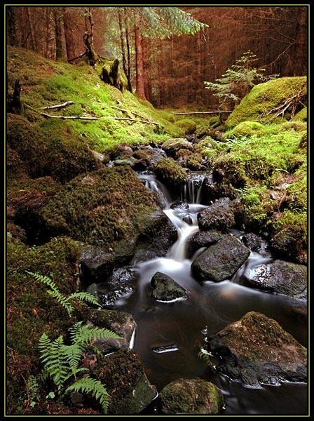 Farigaig Forest by u47sb2