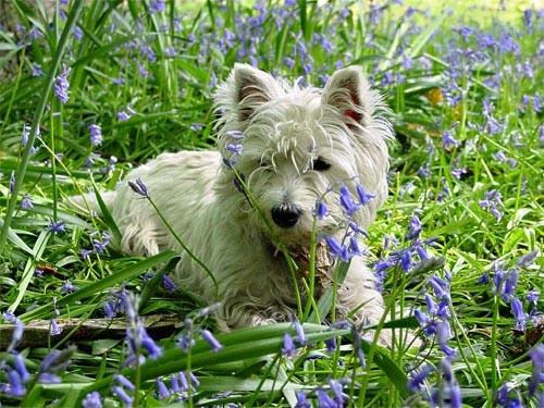 Lulu in the bluebells by HeidiS