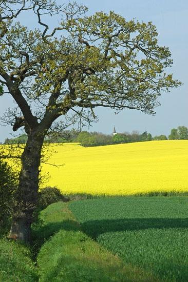Green & Yellow by Stuart61