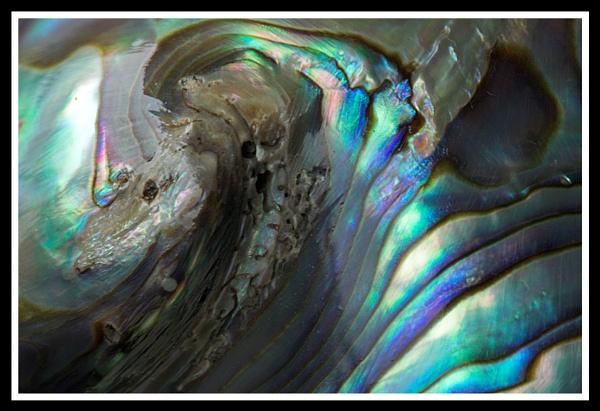 Paua Shell, Macro Close Up by Skier